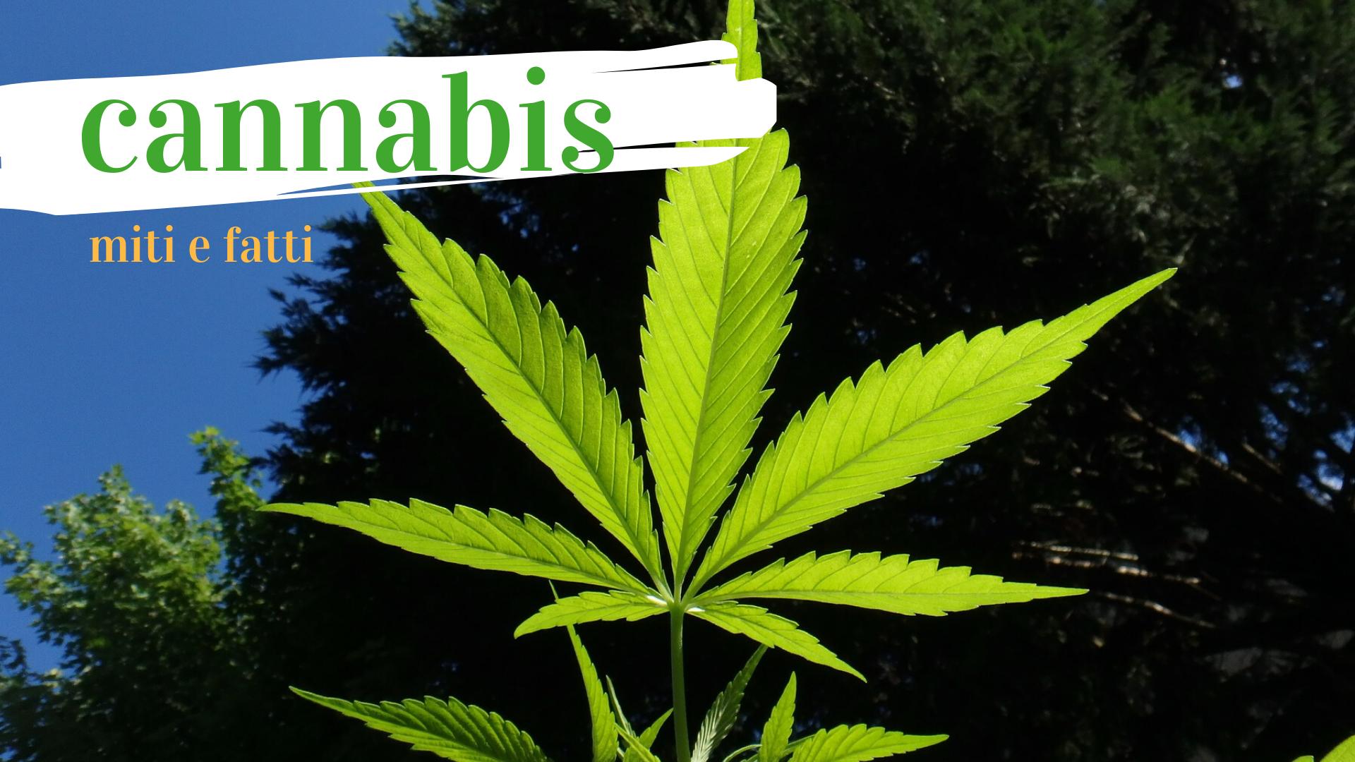 Cannabis. Miti e fatti.